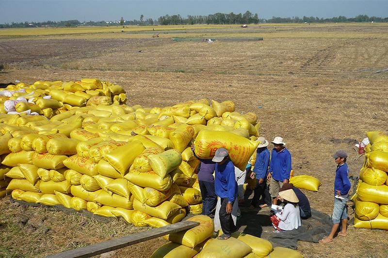 Việt Nam có nhiều vựa gạo xuất khẩu lớn - bao bì gạo việt nam