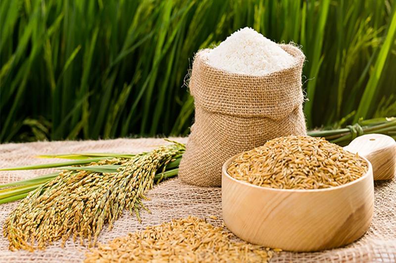 Nông sản lúa, gạo trên thị trường - công ty sản xuất bao bì nông nghiệp