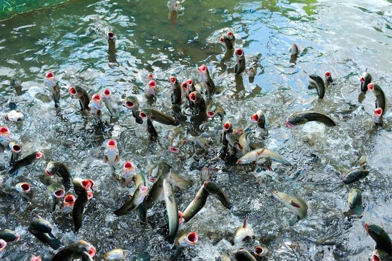 mẫu bao bì thức ăn thủy sản