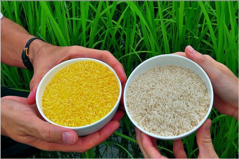 gạo của bao đựng gạo 10kg