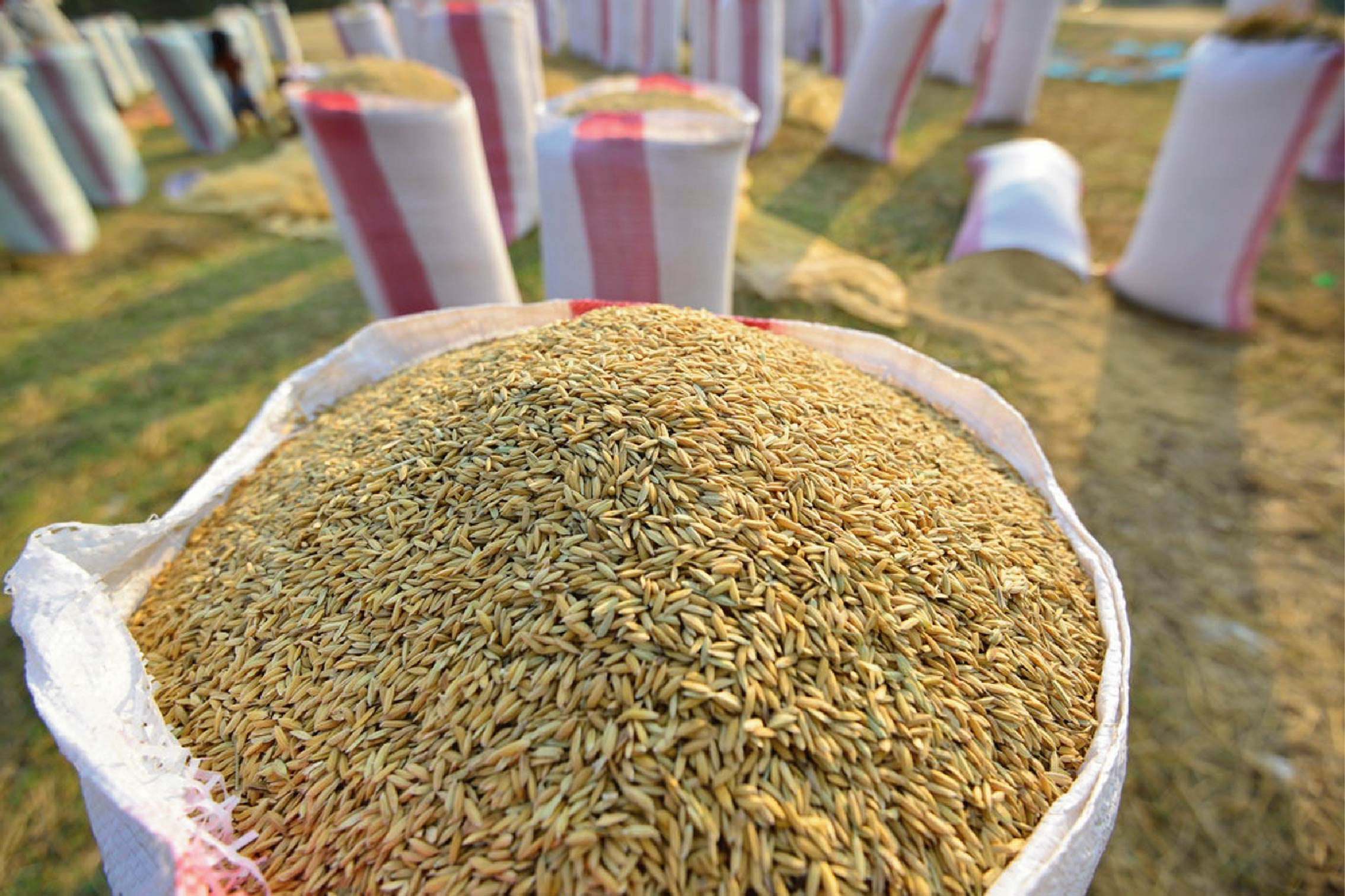 Hạt giống tốt giúp nông dân trúng mùa - bao bì đựng hạt giống cao cấp