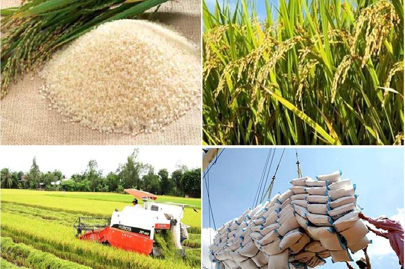 Việt Nam chuyên về sản xuất lúa gạo - bao bì gạo cao cấp