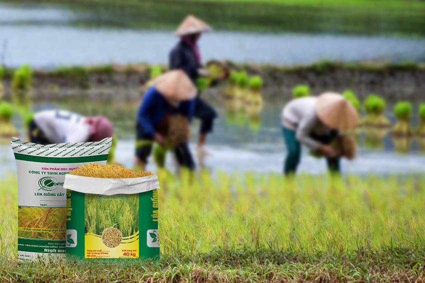 Bao bì lúa giống không thể thiếu giúp bảo vệ sản phẩm an toàn