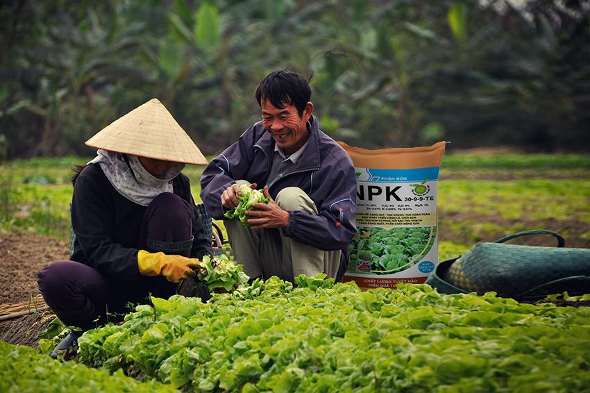 Bao bì phân bón uy tín góp phần nâng cao giá trị nông sản