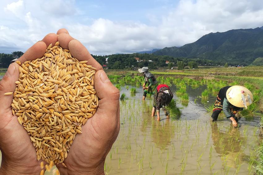 Bao bì lúa giống giúp bà con nông dân bảo vệ hạt lúa