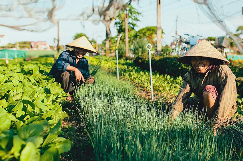 phân bón giúp cho cây trồng ngày một tươi tốt