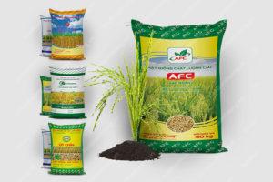 sản phẩm lúa giống bao bì ánh sáng