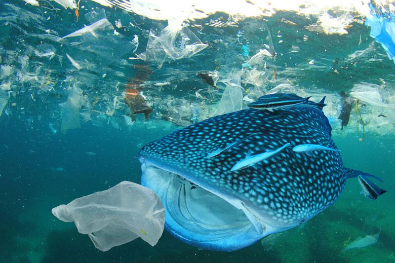 Sử dụng giấy để giảm lượng rác thải nhựa ra môi trường - in giấy kraft tráng pe