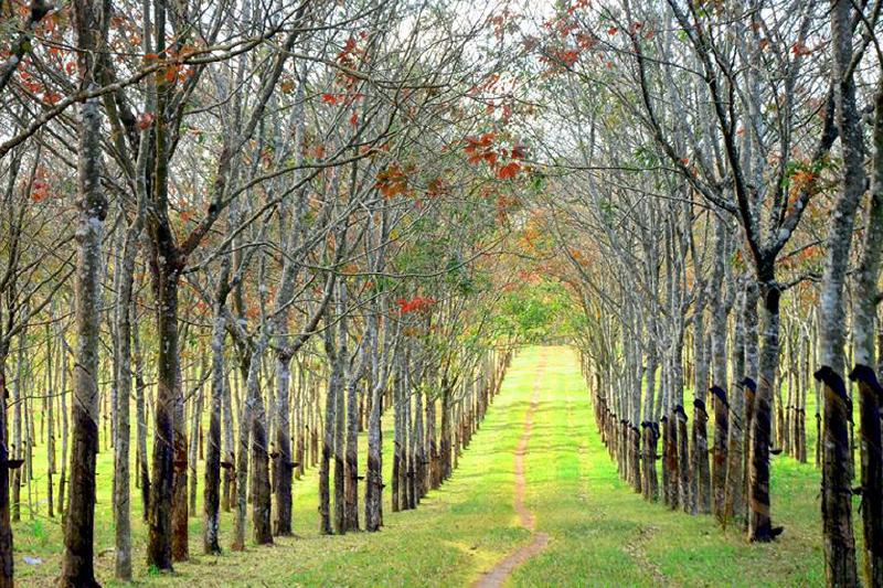 Cây trồng lâu năm hút hết chất dinh dưỡng - phân bón cải thiện độ chua của đất