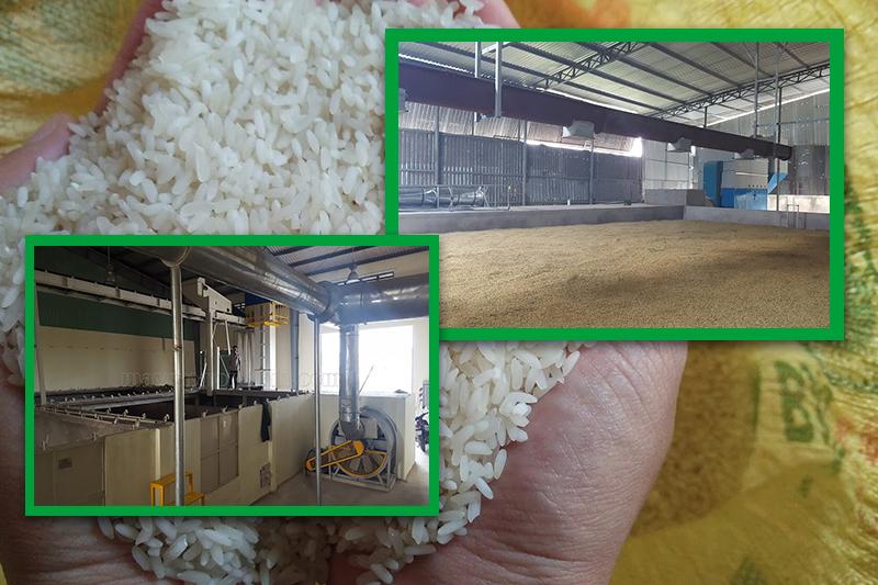 Sử dụng máy sấy thay cho phương pháp phơi lúa truyền thống - thương hiệu ngành lúa gạo