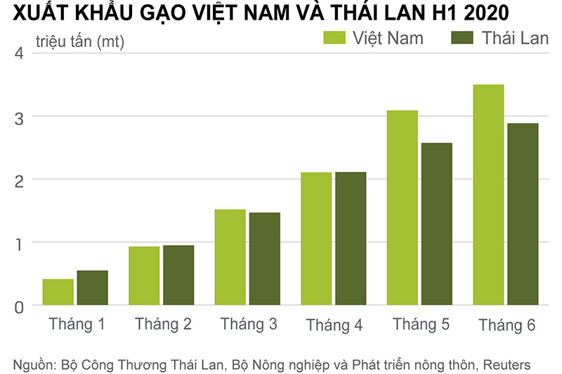 tình hình xuất khẩu gạo Việt Nam và Thái Lan