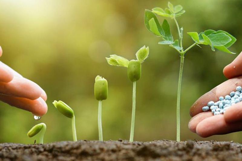 Phân lân là yếu tố quan trọng trong quá trình phát triển của cây trồng