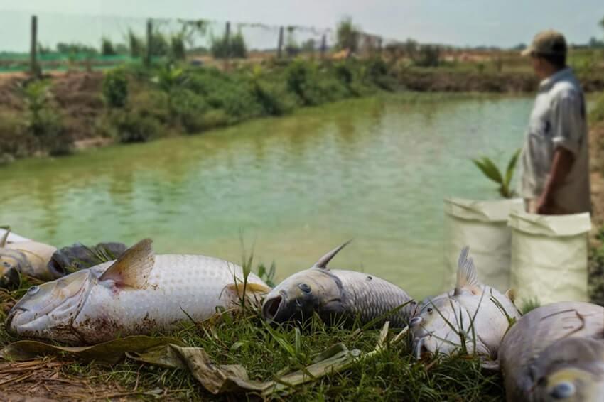 Bao thức ăn thủy sản không nguồn gốc rõ ràng sẽ không đảm bảo được chất dinh dưỡng cần thiết