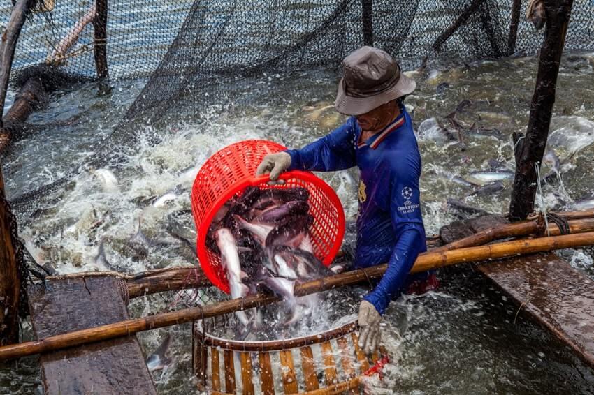 Nước ta có nhiều lợi thế để kinh doanh thủy hải sản